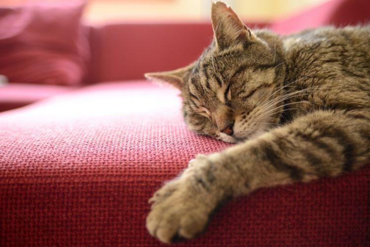 Ternyata Begini Arti Posisi Tidur Kucing