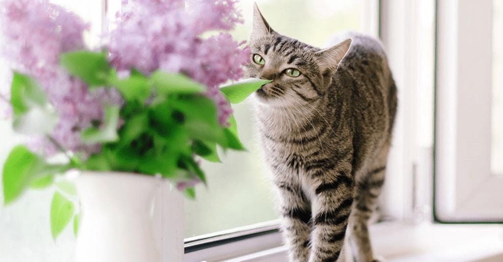 Ini Dia 8 Bau-Bauan Yang Tidak Disukai Kucing