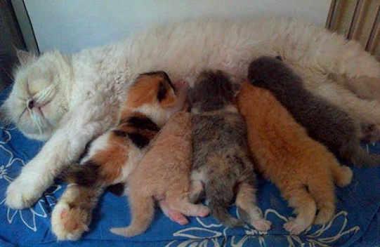 Cats Lover Wajib Tahu! Begini Ciri-Ciri Kucing Mau Melahirkan